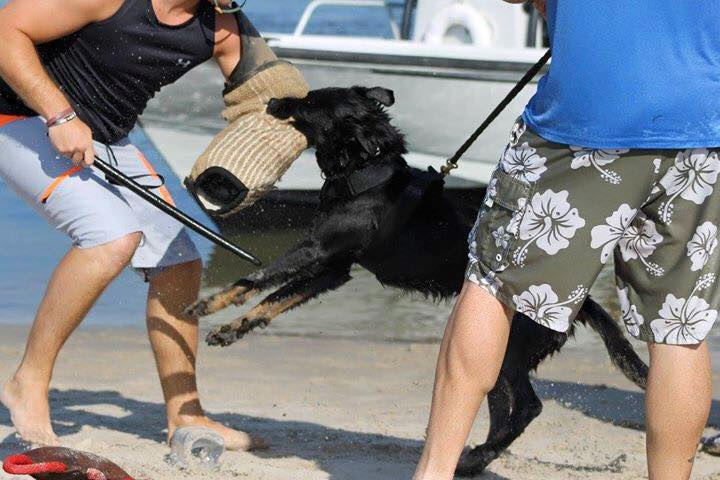 Dog Attack Response