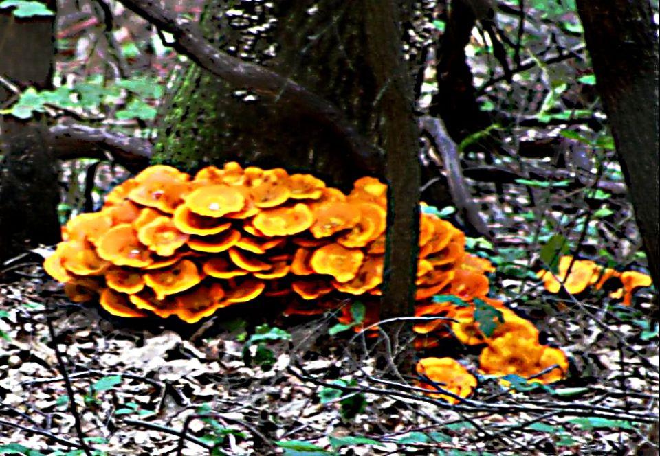 https://0201.nccdn.net/1_2/000/000/101/e0f/Fungi---35--960x664.jpg