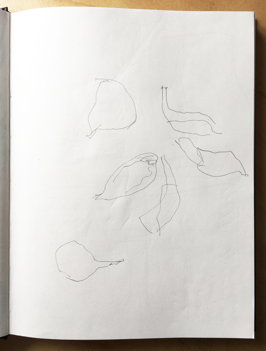 A sketchbook page with a minimalist pencil outline drawing of flower petals.