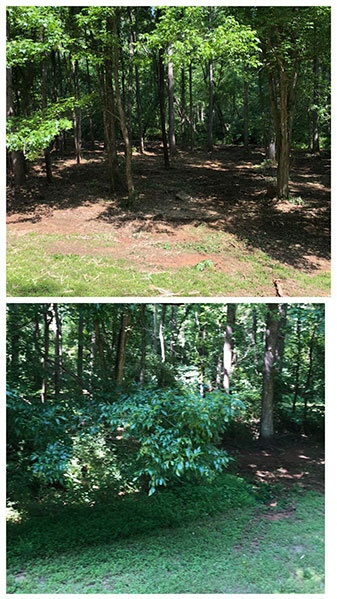 Forestry Clearing Before-After 2