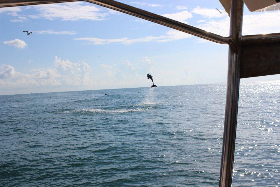 dolphintour.jpg