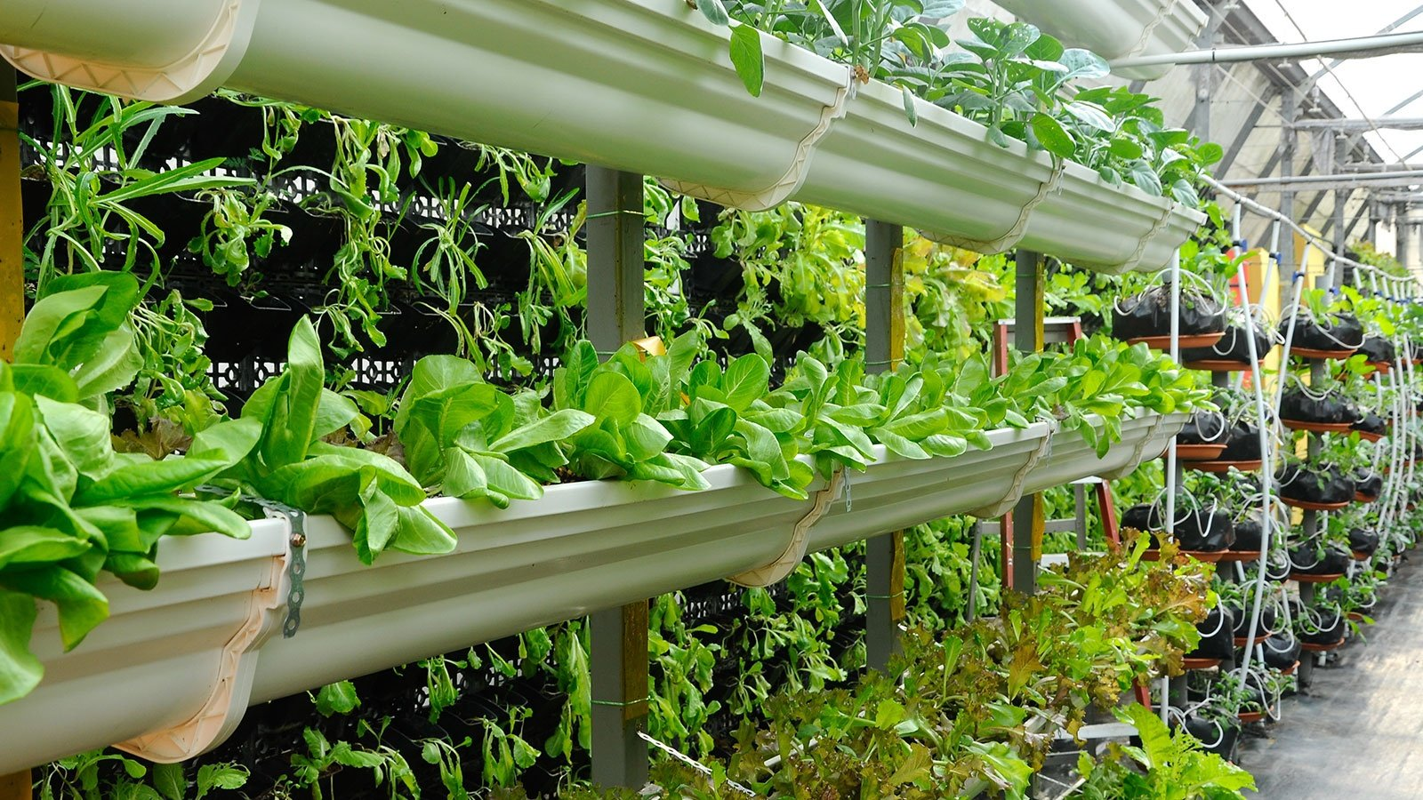 Using Less Soil And Water Mixed With Fertilizer