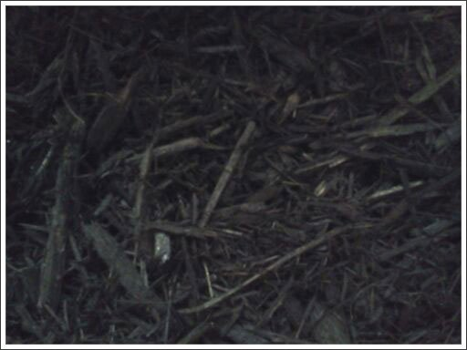 Black mulch||||