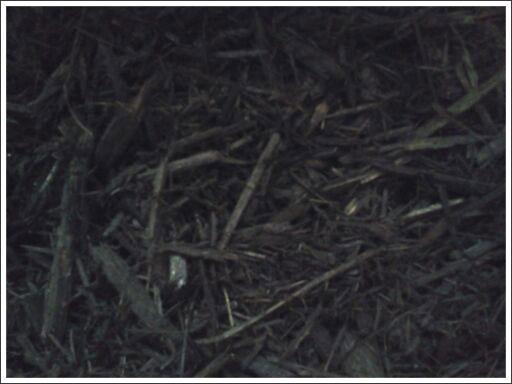 Black mulch||||