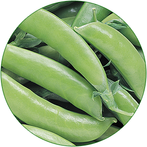 Pea Super Sugar Snap