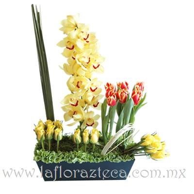 MD - 145  $2,690 Tulipanes en dos tonalidades,orquídeas cymbidium y rosas