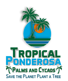 Tropical Ponderosa