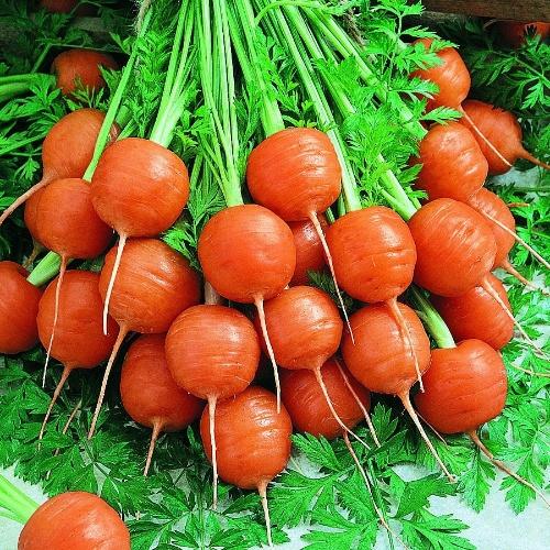 Carrots Baby Nantes Types Thumbelina
