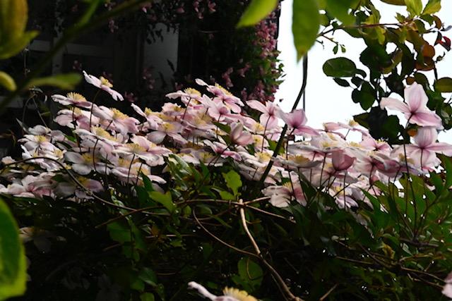 More from Sanda's garden.