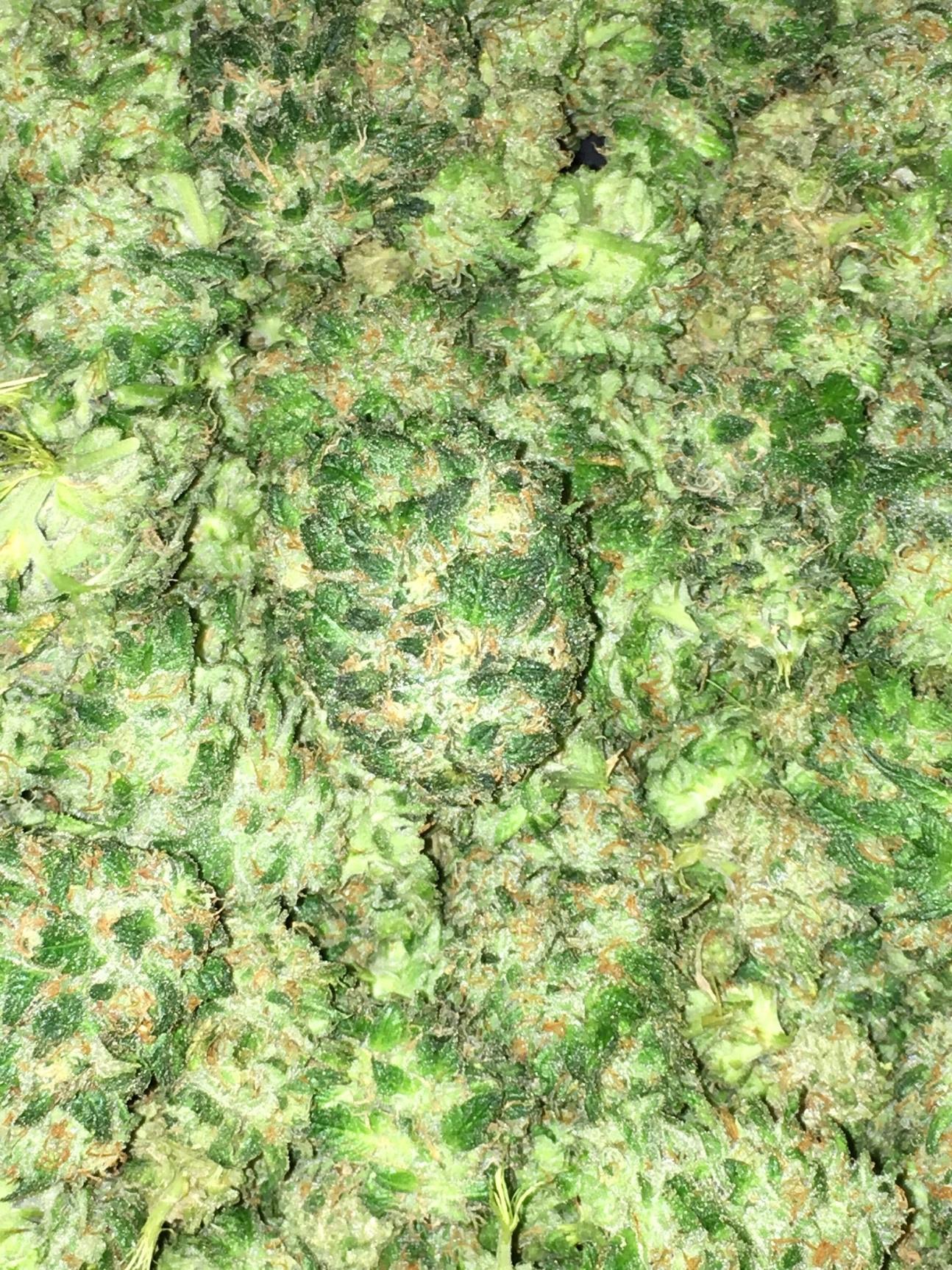 Medicinal Cannabis 8