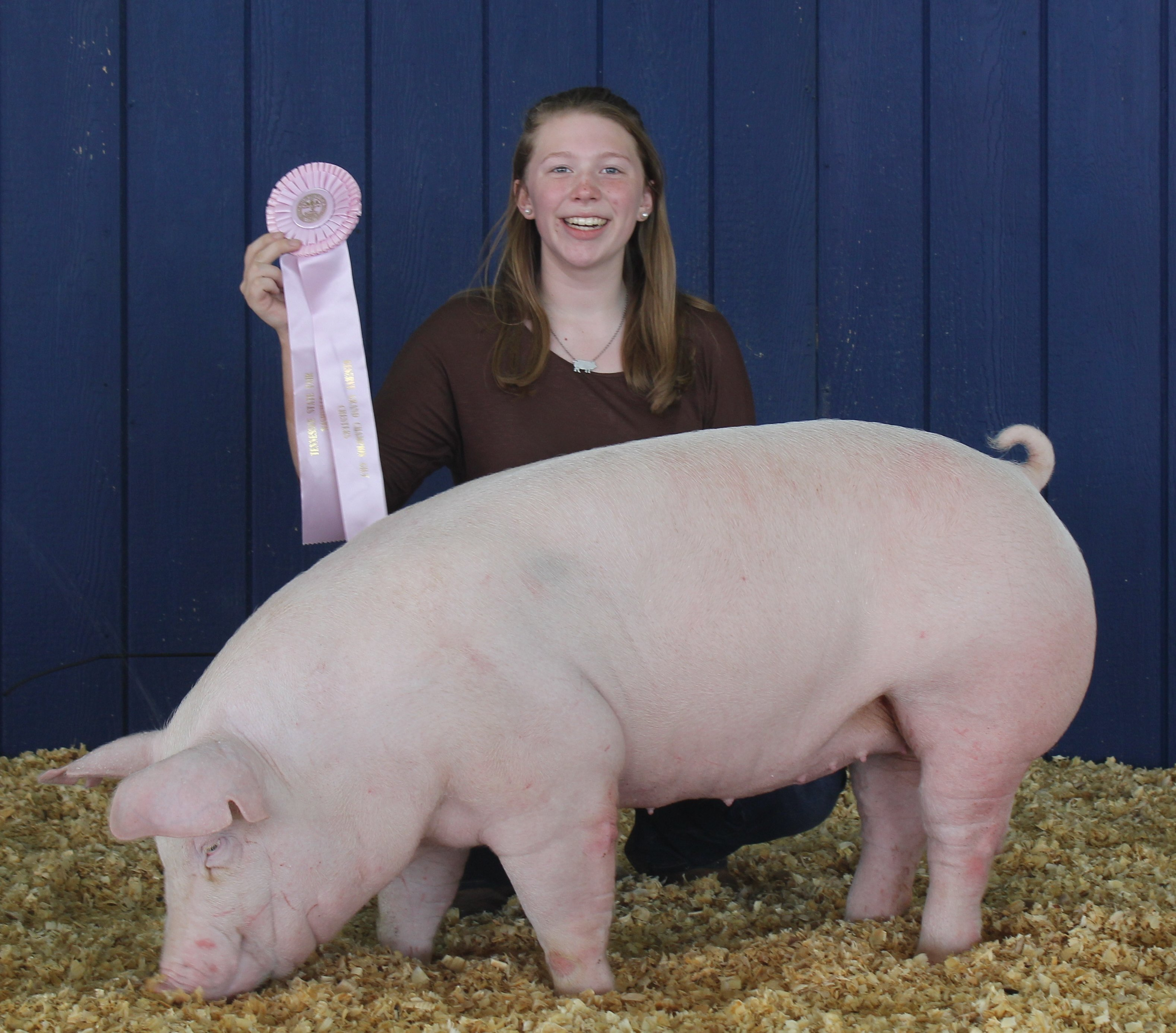 Kennedy Hill 2016 Tennessee State Fair Reserve Champion Chester White Gilt