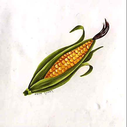 https://0201.nccdn.net/1_2/000/000/112/386/corn.jpg