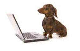 Dachshund and laptop