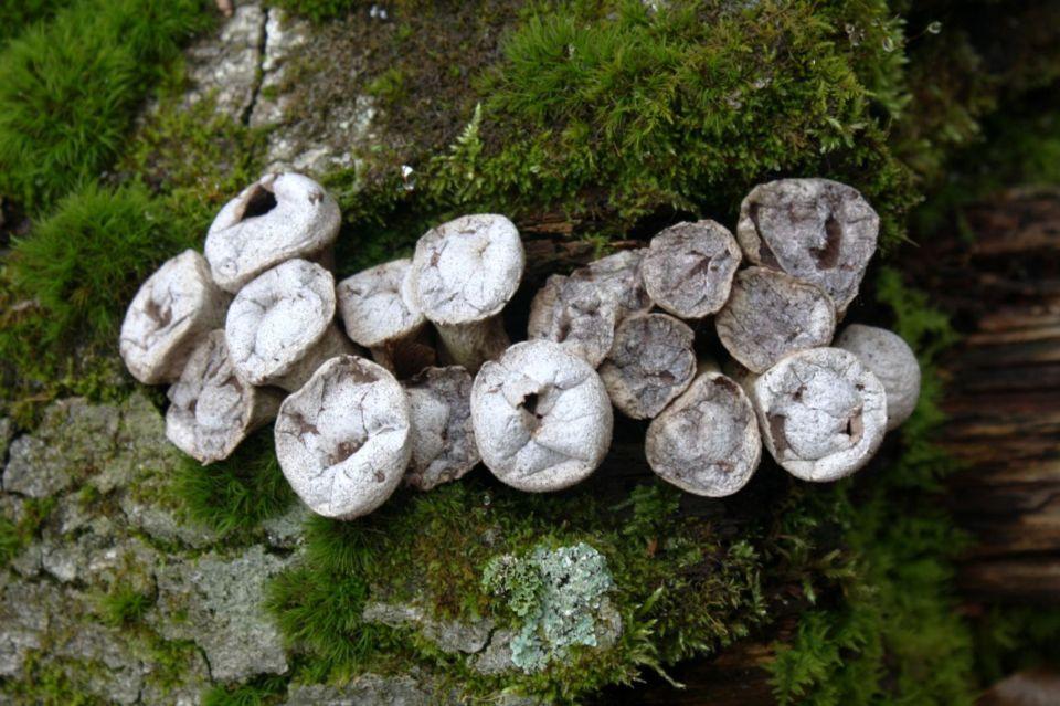 https://0201.nccdn.net/1_2/000/000/113/187/Fungi---21--960x639.jpg