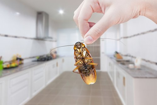Eliminate Cockroach in Kitchen