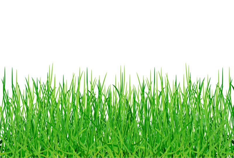 Green grass||||