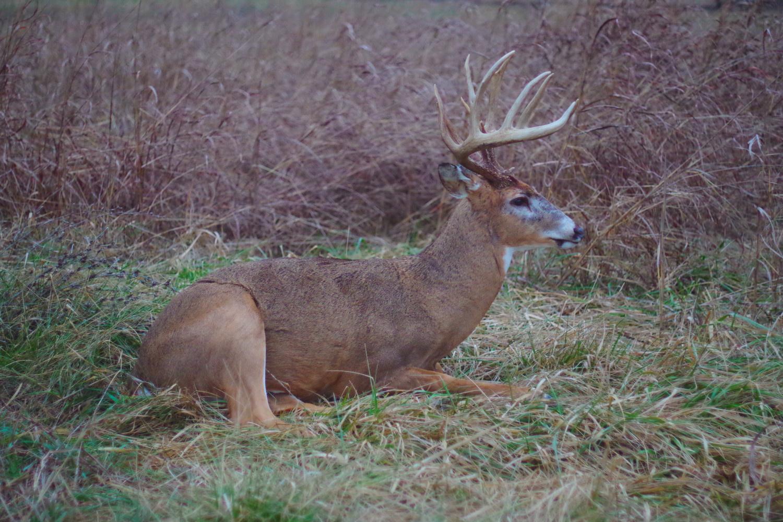 lifesize-deer
