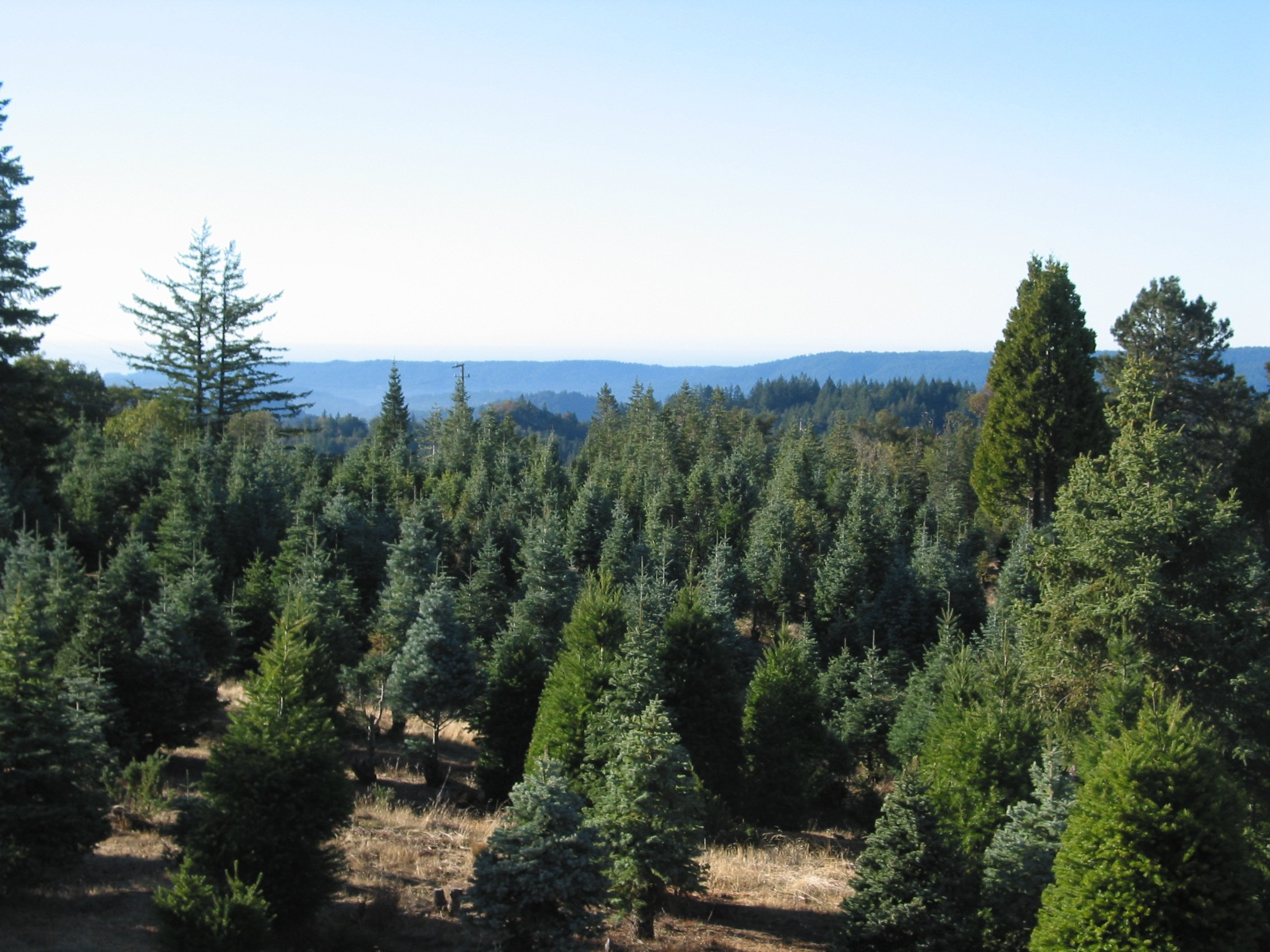 Four Winds Christmas Trees - Home