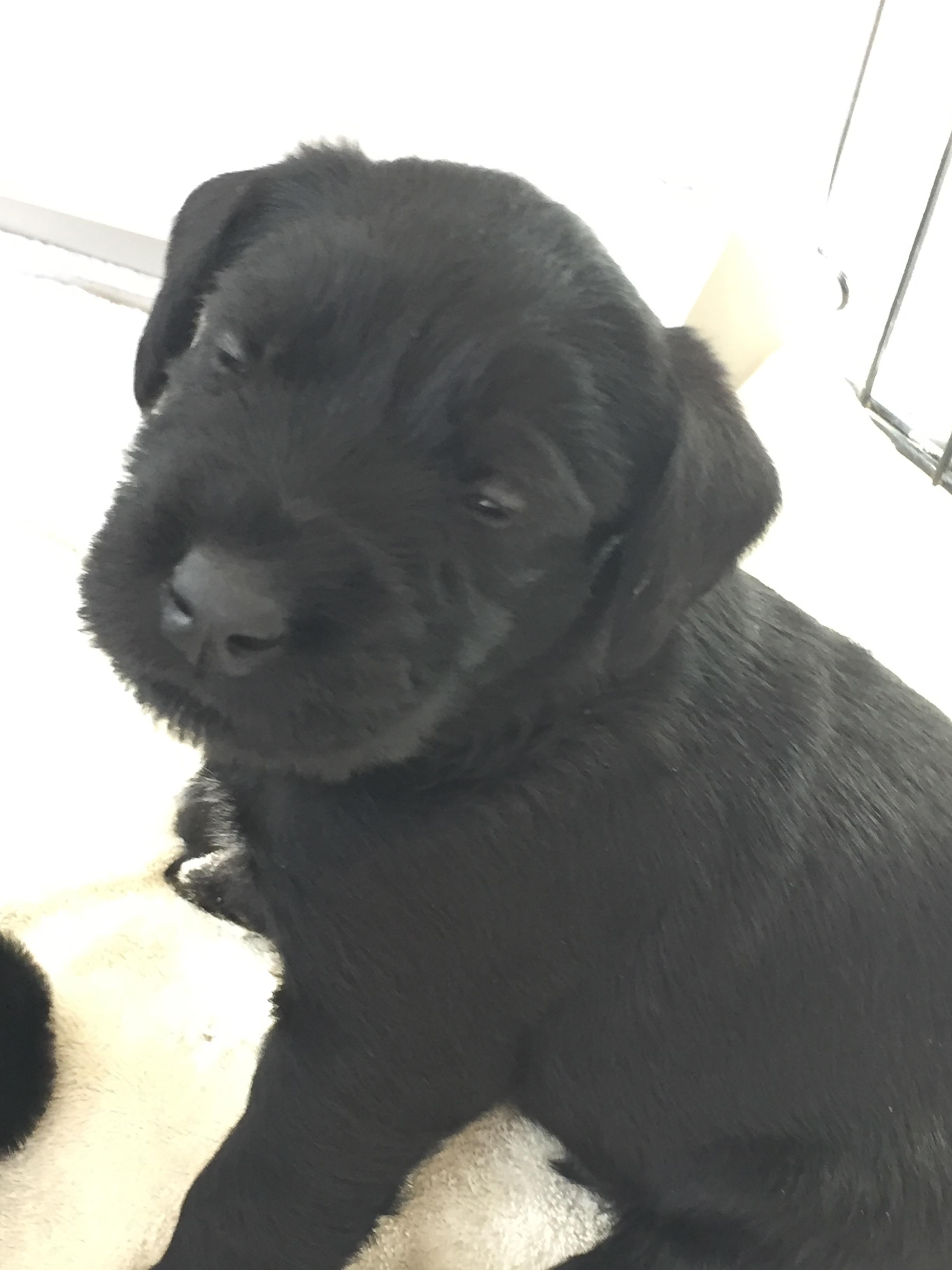 https://0201.nccdn.net/1_2/000/000/119/04c/Puppy-5.jpg