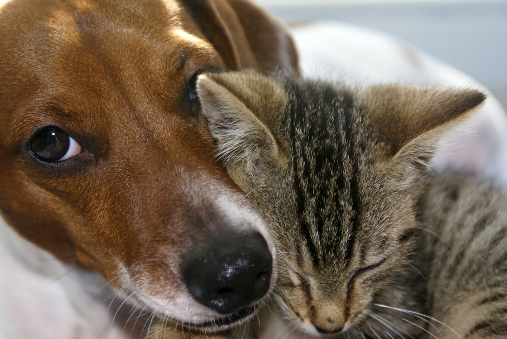 Dog and cat snuggling||||
