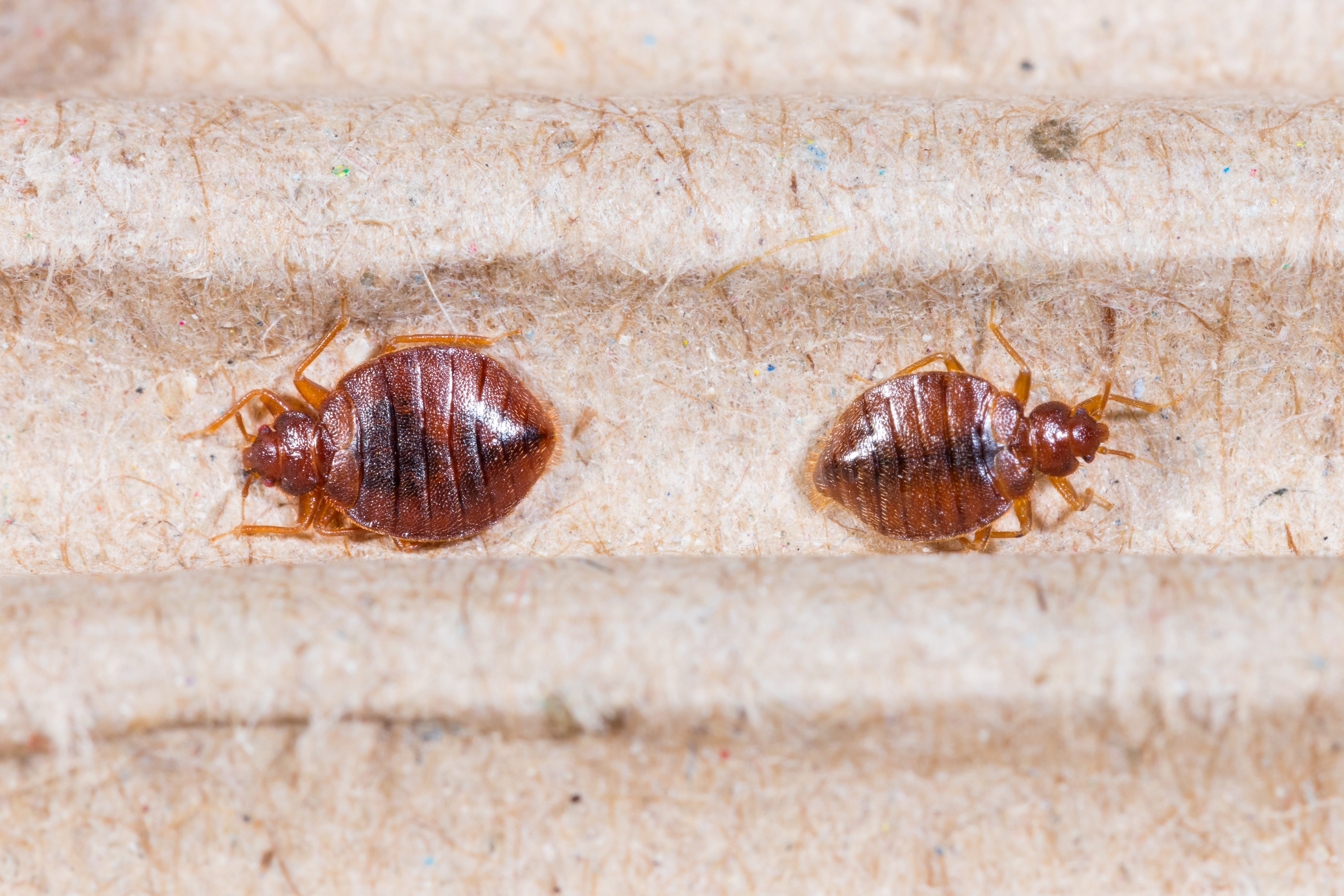 Thatu0027s Key If You Want To Avoid The Possibility Of Another Infestation. So,  How Effective Are Commercial Bed Bug Heaters? They May Be The Most  Effective ...
