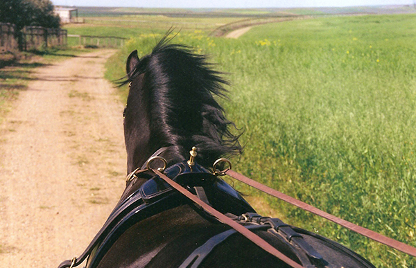 Culpeper Horse