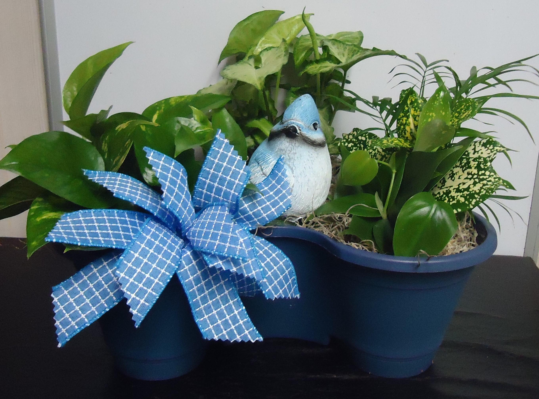 (15) Three Plant Combo W/Bird $45.00