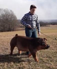 Tylan Lusk Champion Duroc Market Hog 2021 Tennessee State Virtual Show