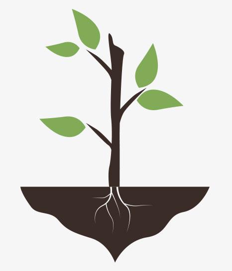 Organic Agriculture Fertilizers