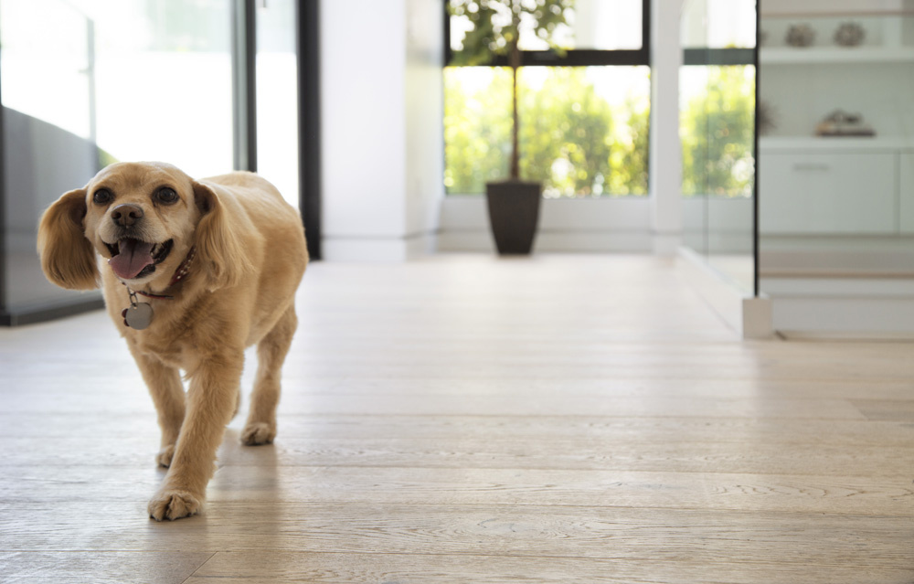 Come meet Lady at Kindred Flooring