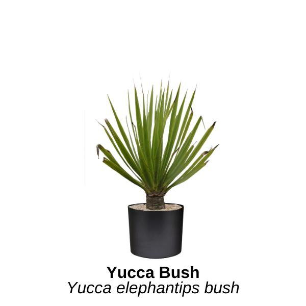 https://0201.nccdn.net/1_2/000/000/120/38e/yucca-bush--2-.png