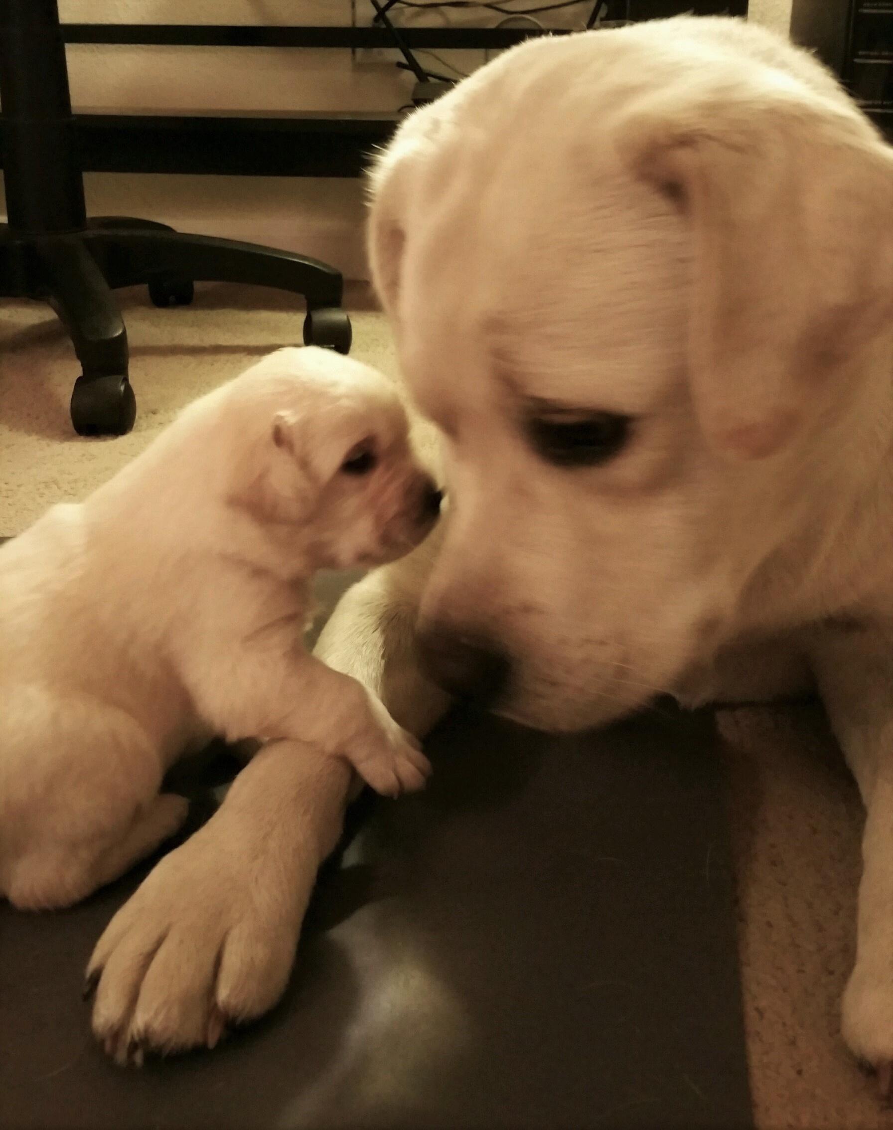 https://0201.nccdn.net/1_2/000/000/120/ba7/Mother---Daughter-5-15-1792x2267.jpg