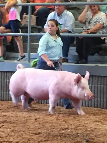 Ann Thomas Lowery 2018 Dyer County Fair Champion Yorkshire Gilt