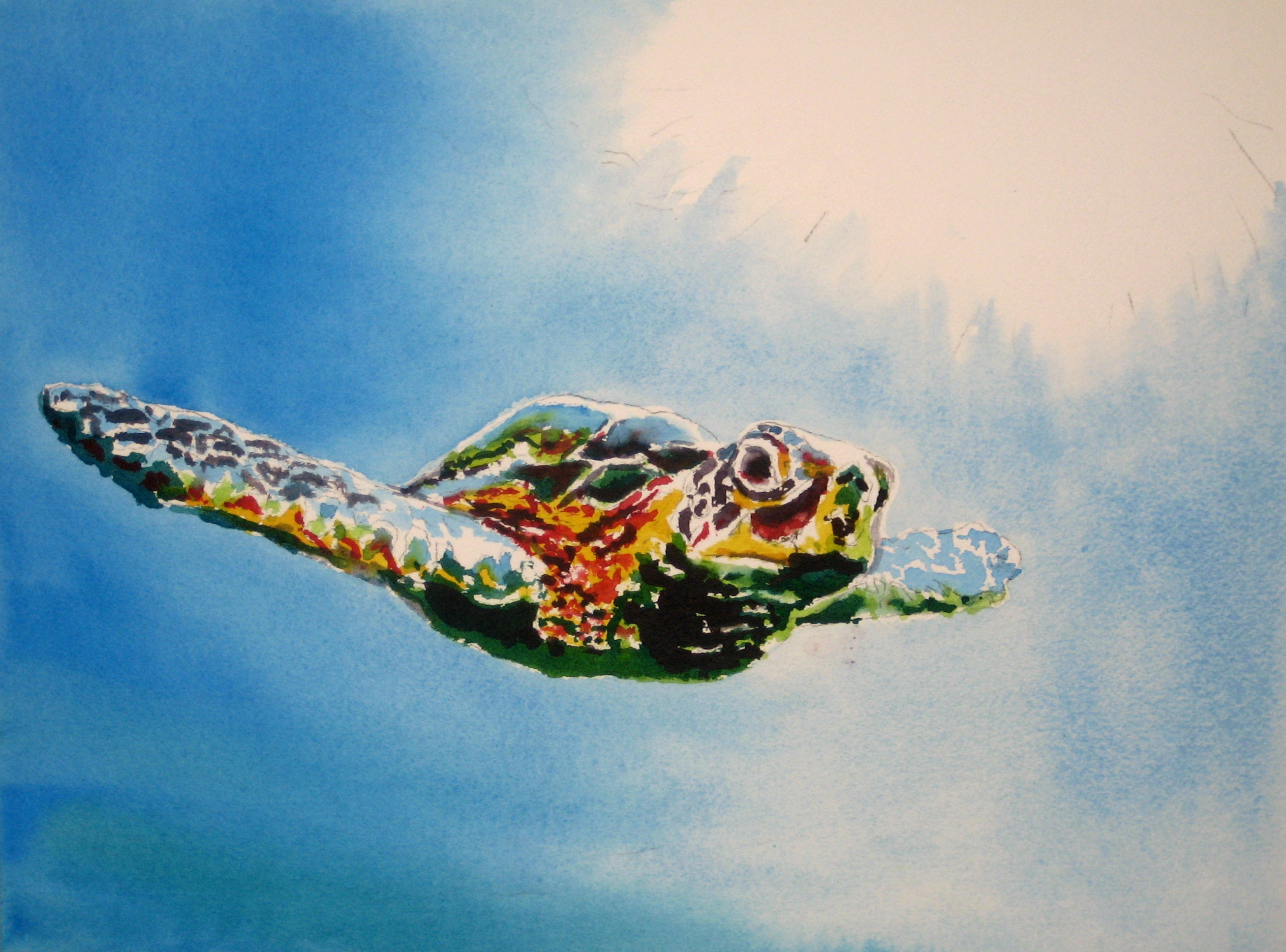 https://0201.nccdn.net/1_2/000/000/122/8c8/Sea-Turtle-2530x1872.jpg