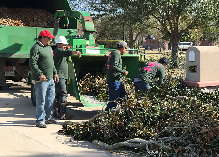 Tree Service Experts