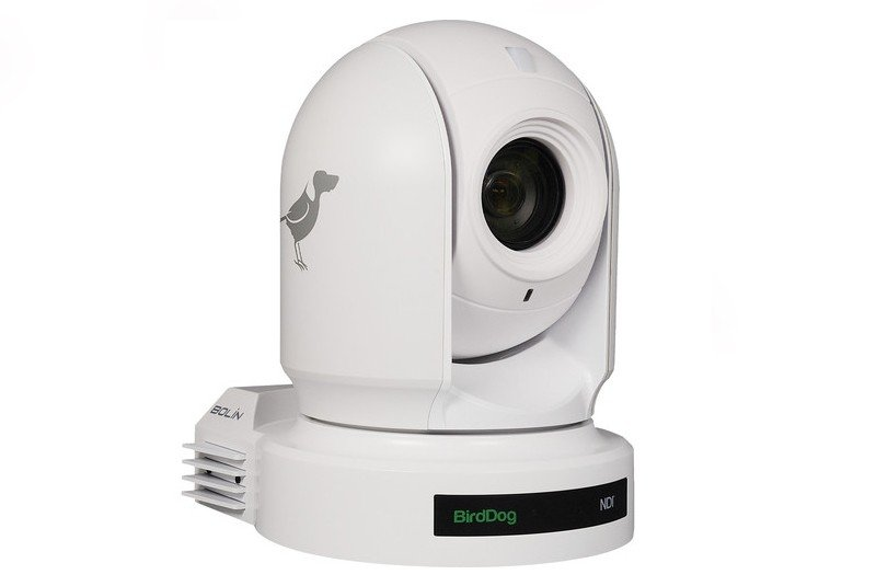 ptz bird dog remote cameras