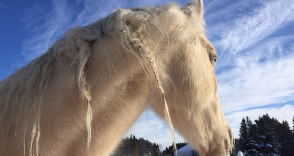 Horse During Winter