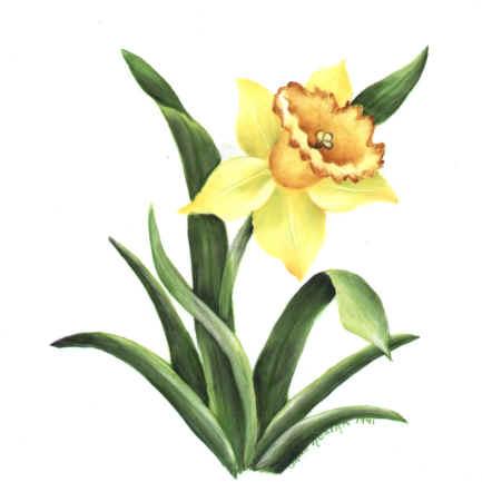 https://0201.nccdn.net/1_2/000/000/125/9c0/daffodil_large_.jpg