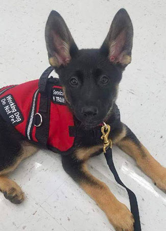 Piper, Drug Detection Dog