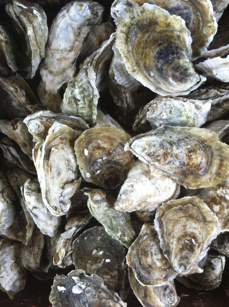THANKS TO OUR FRIENDS & COLLEAGUES AROUND THE WORLD INVOLVED IN OYSTER FARMING ..........