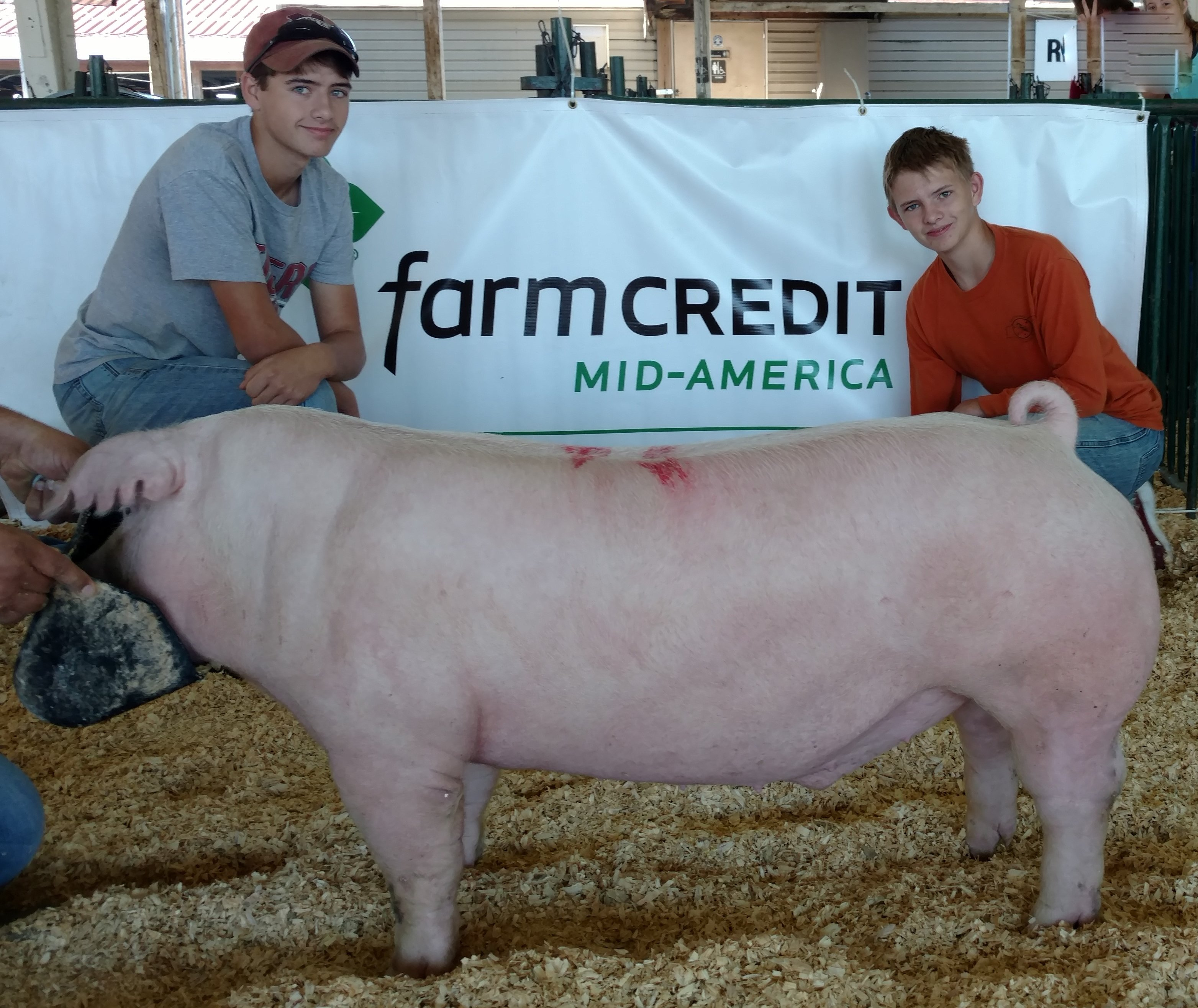 Will and Gill Derryberry 2016 Tennessee State Fair Champion Chester White Barrow