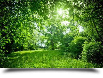 El poder de curar árboles||||