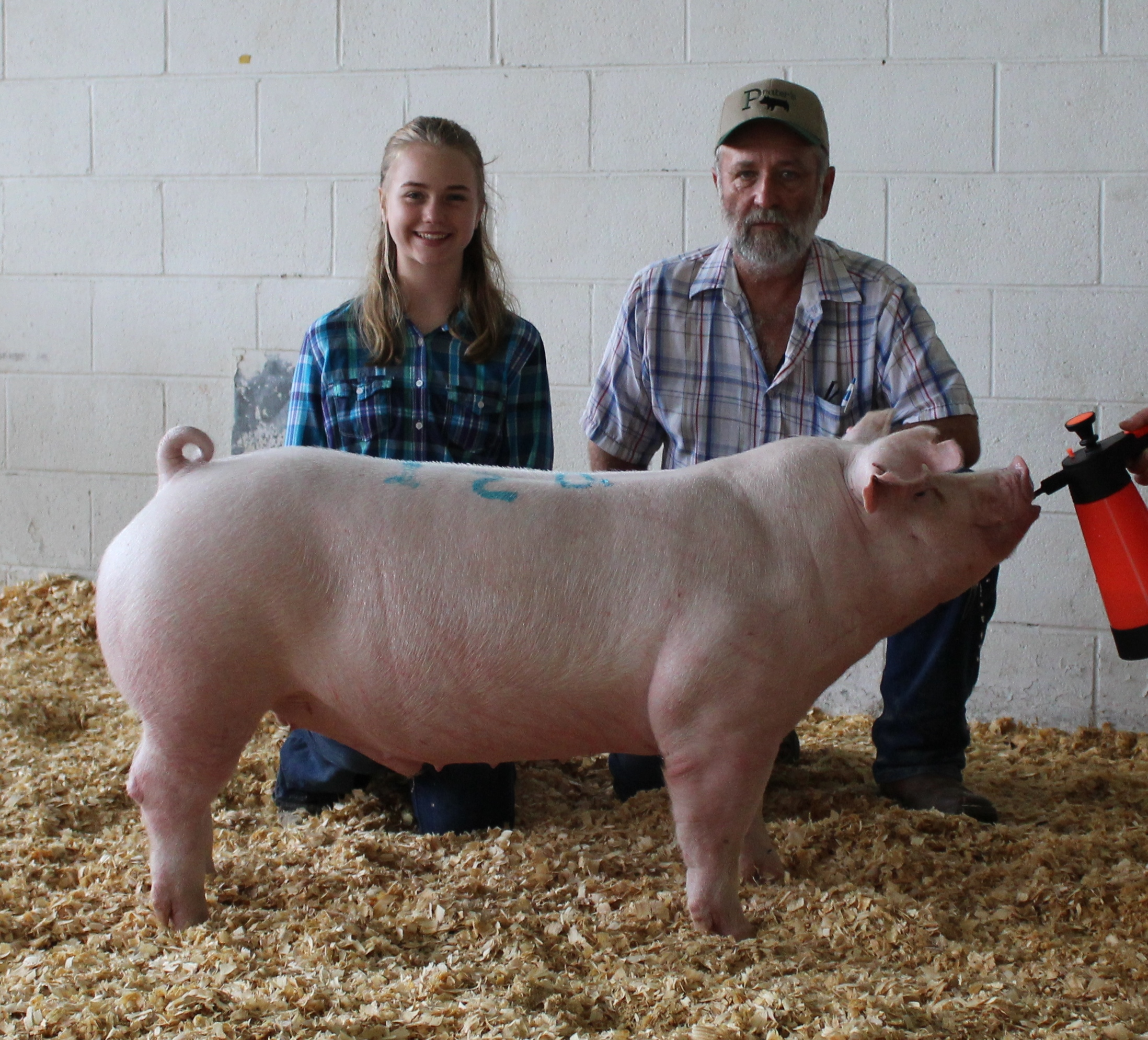 Hannah Sanders 2018 Tennessee State Fair Champion Chester White Barrow
