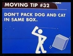 moving tip: don't pack dog and cat in same box