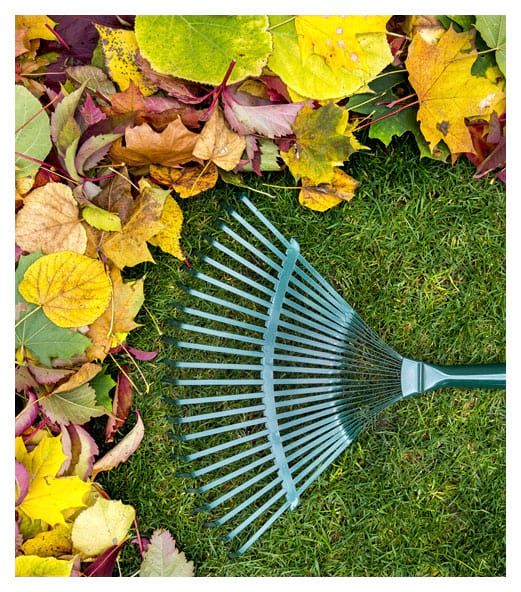 Rake on a Wooden Stick and Colored Autumn Foliage