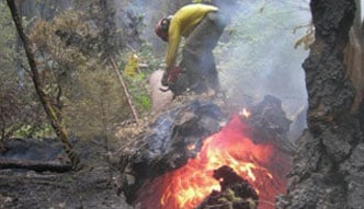 Wildfire Services