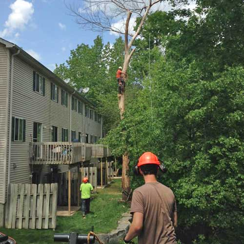 Arborists At Work