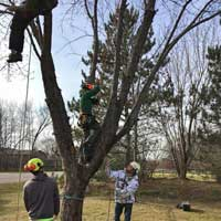 Tree Care Specialists