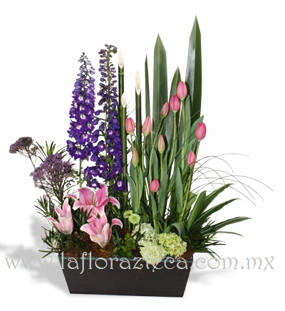 MD - 115  $1,690 Elegante composición de tulipanes,perritos,hortensias y acapulco