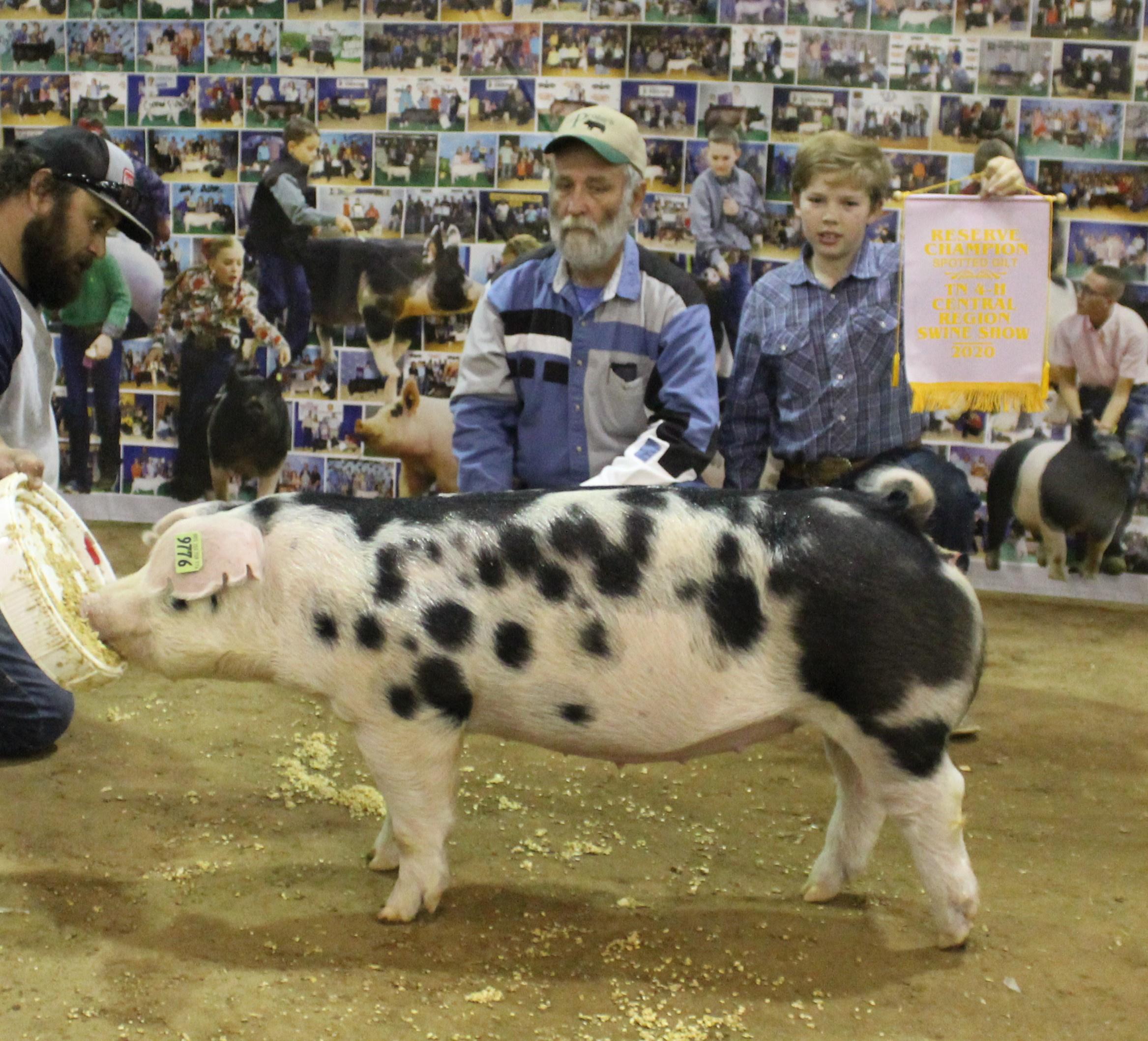 Casper Cossitt 2020 Tennessee Central Region Show Reserve Champion Spot Gilt